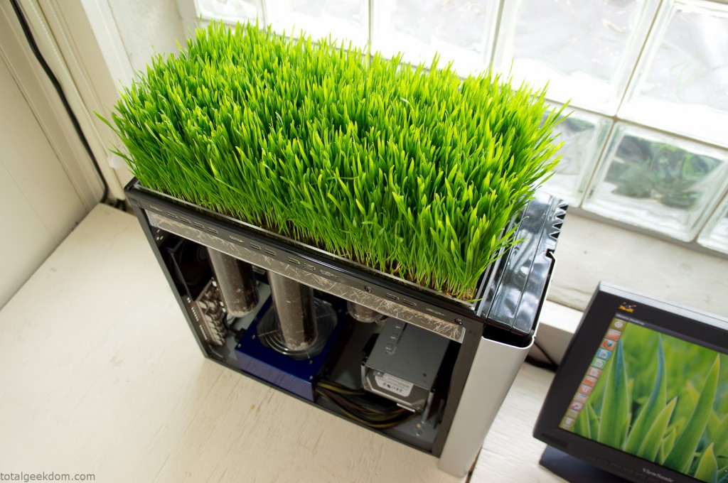 Working Computer with Grass