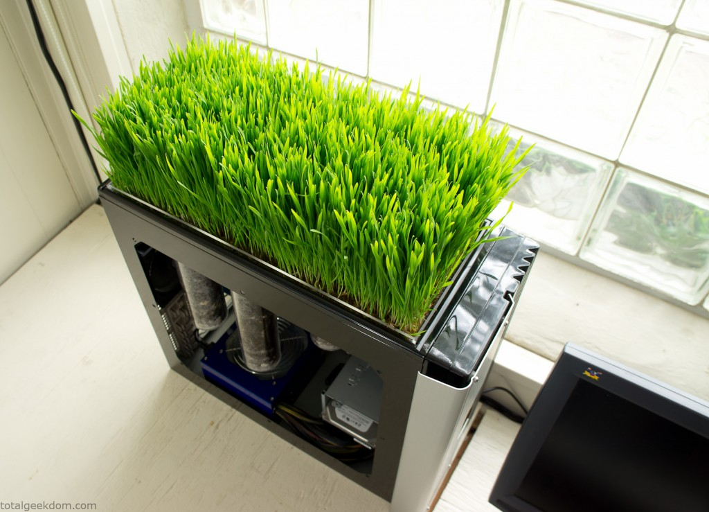 Growing Grass in Computer